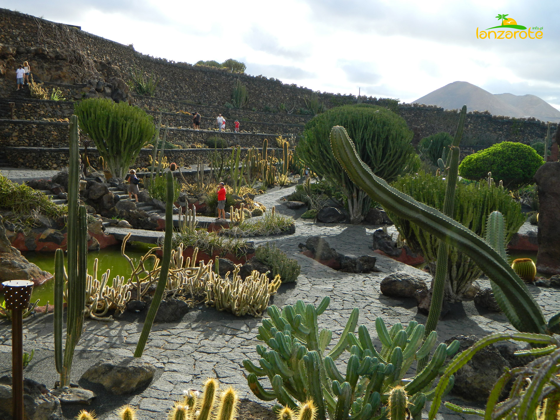 Jardin De Cactus Latest Art And Cacti Appear Side By Side In This