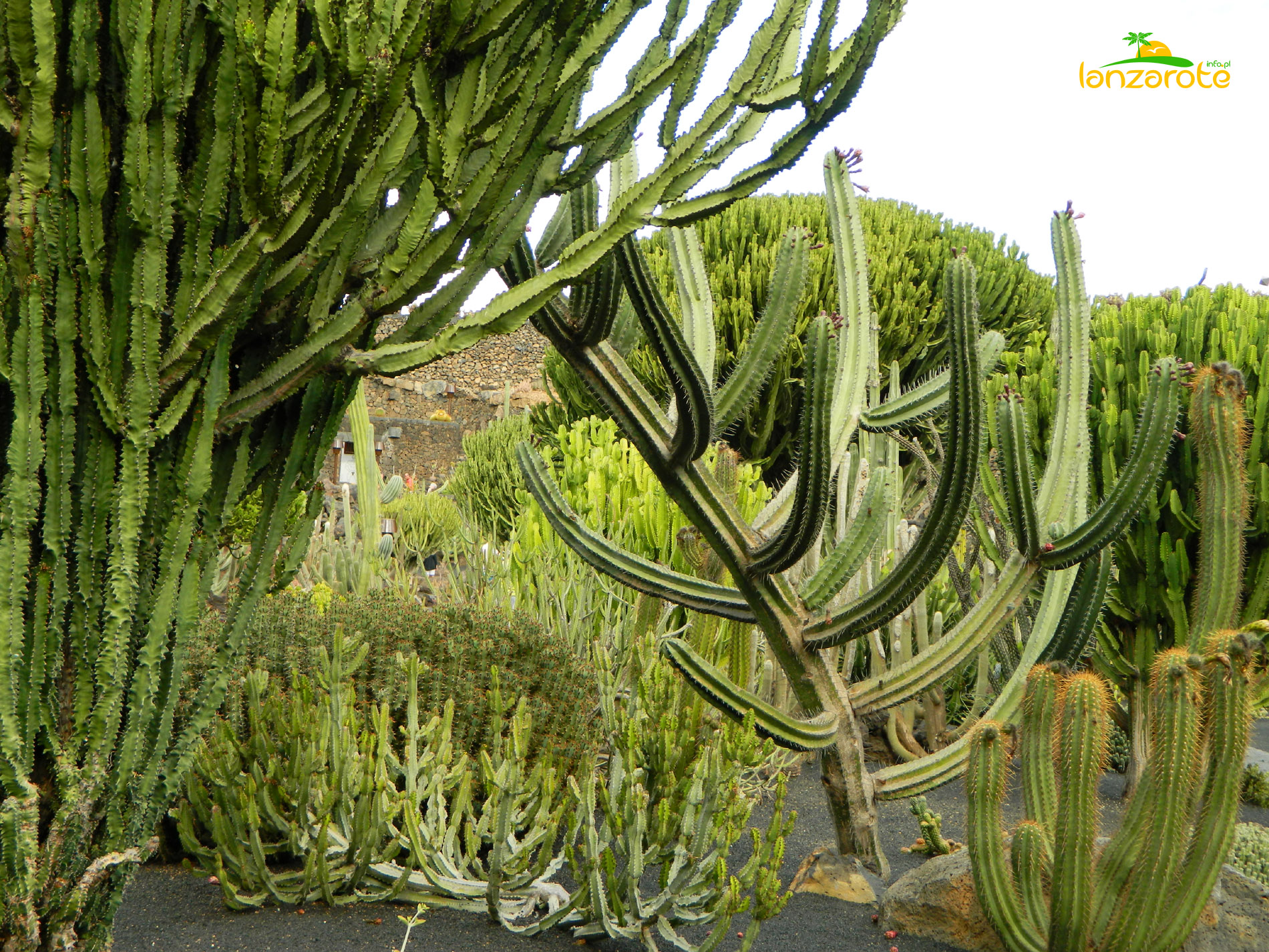 jardin de cactus lanzarote informacje o wyspie. Black Bedroom Furniture Sets. Home Design Ideas