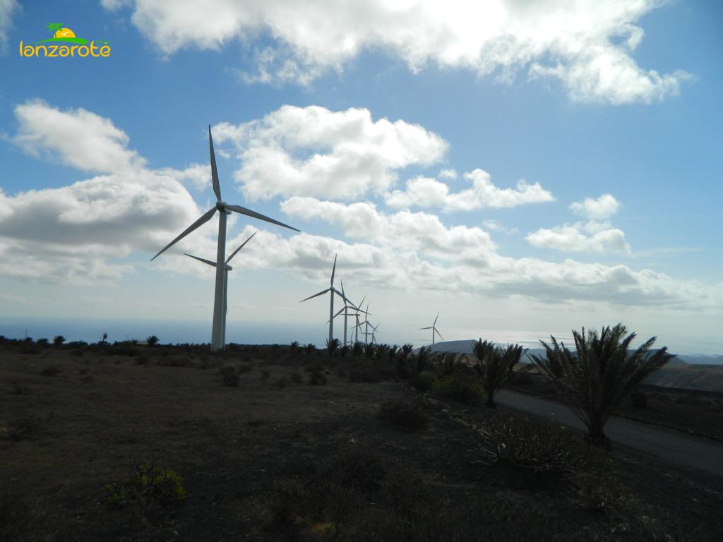 Lanzarote - wiatraki