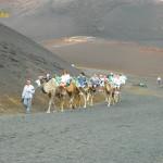 Wielbłądy w Parku Timanfaya